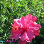 El jardín de mi abuela en Paipa