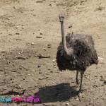 Zoologico Sante Fe
