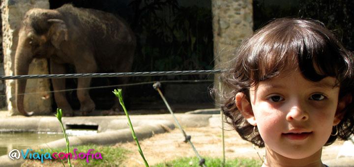 sofia en el zoo santa fe