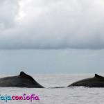Lomos de ballenas